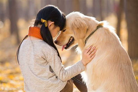 Why do Dogs love humans.