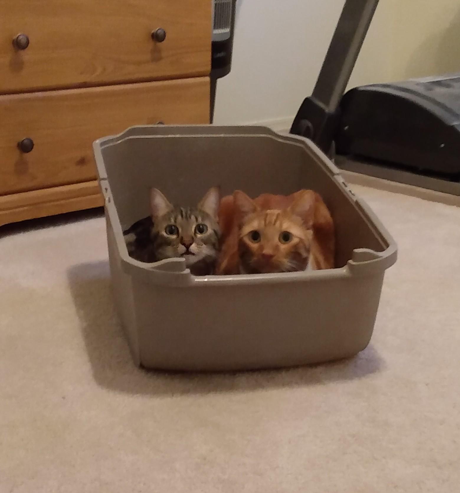 Cats like any box